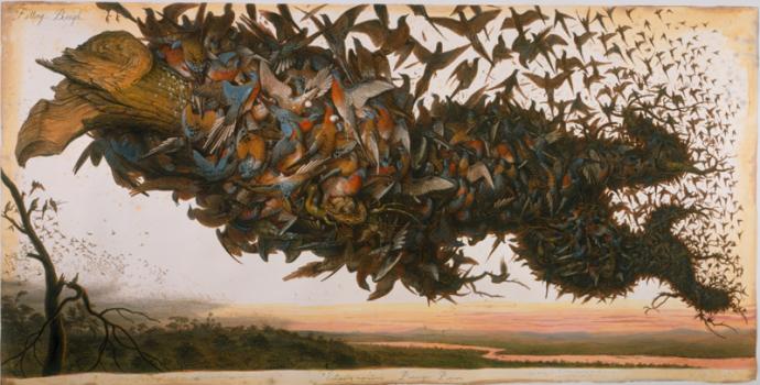 Walton Ford - Falling bough - Ectopistes migratorius - Passenger pigeon 2002, aquarelle, gouache, encre et crayon 2100s