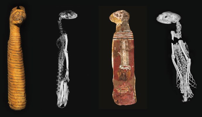 Animal_Mummies_Cats_Xrays