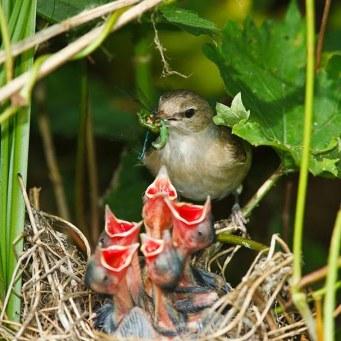 Baby-Birds-Dinner-Time-1