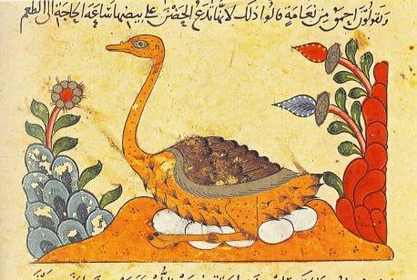BirdonEggsCrop