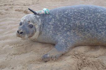 MR-vodafone-smru-seal-with-smart-tag-3