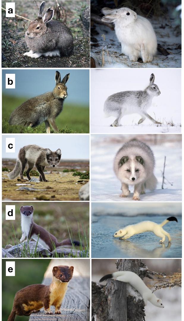 especies cambian color