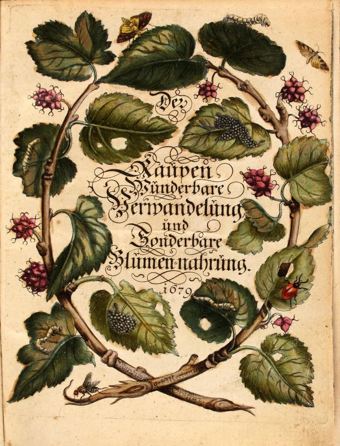 Merian_-_Der_Raupen_wunderbare_Verwandelung_und_sonderbare_Blumennahrung_-_1