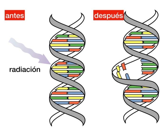radiaiconADN